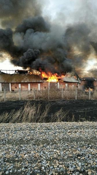 В алтайском селе полыхнули заброшенные склады местного элеватора