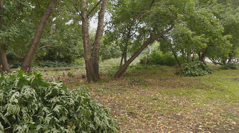 Санитары леса чиновники взялись наводить порядок очередной зеленой зоне Барнаула