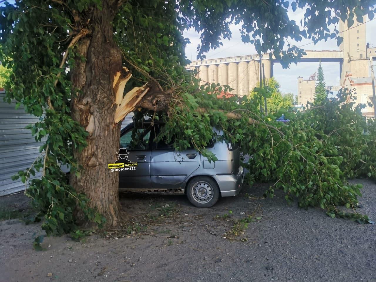 В Барнауле женщина получила множественные переломы из-за упавшего нее дерева