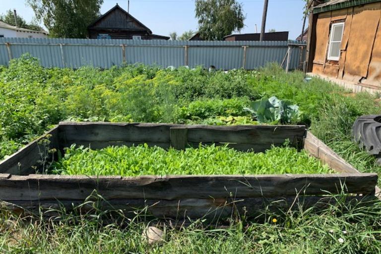Жительнице Родинского района грозит уголовный срок маковый цветник огороде