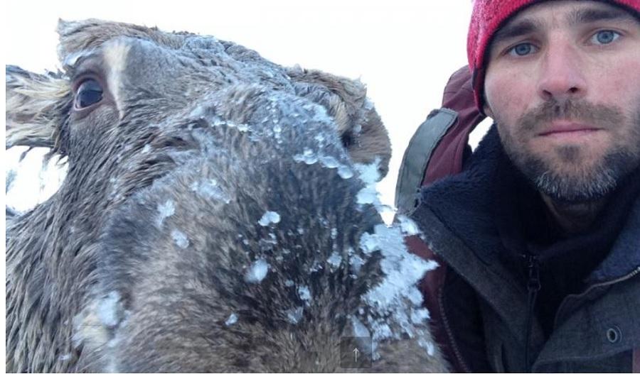 ВАлтайском крае рыбак спас провалившегося под лед лося