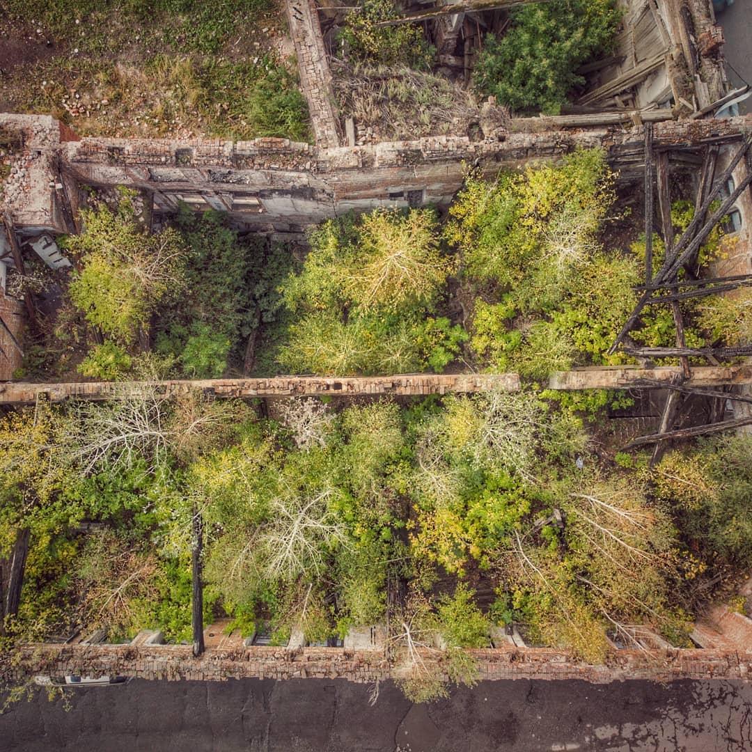 Шанс исправиться барнаульские жириновцы предложили разбить парк заросшем скелете купеческого дома