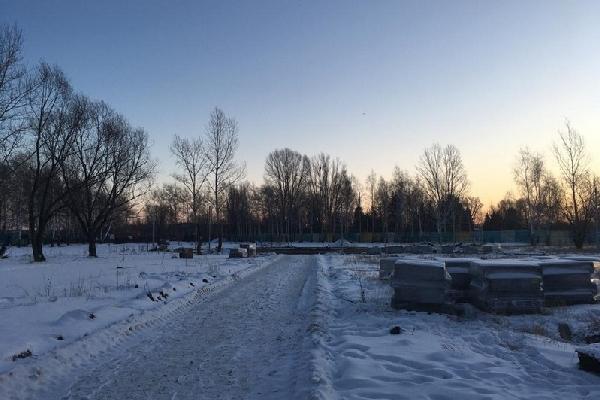 Цветы декабре сажать будем спикер алтайского парламента остался недоволен затянувшимся благоустройством рубцовского сквера