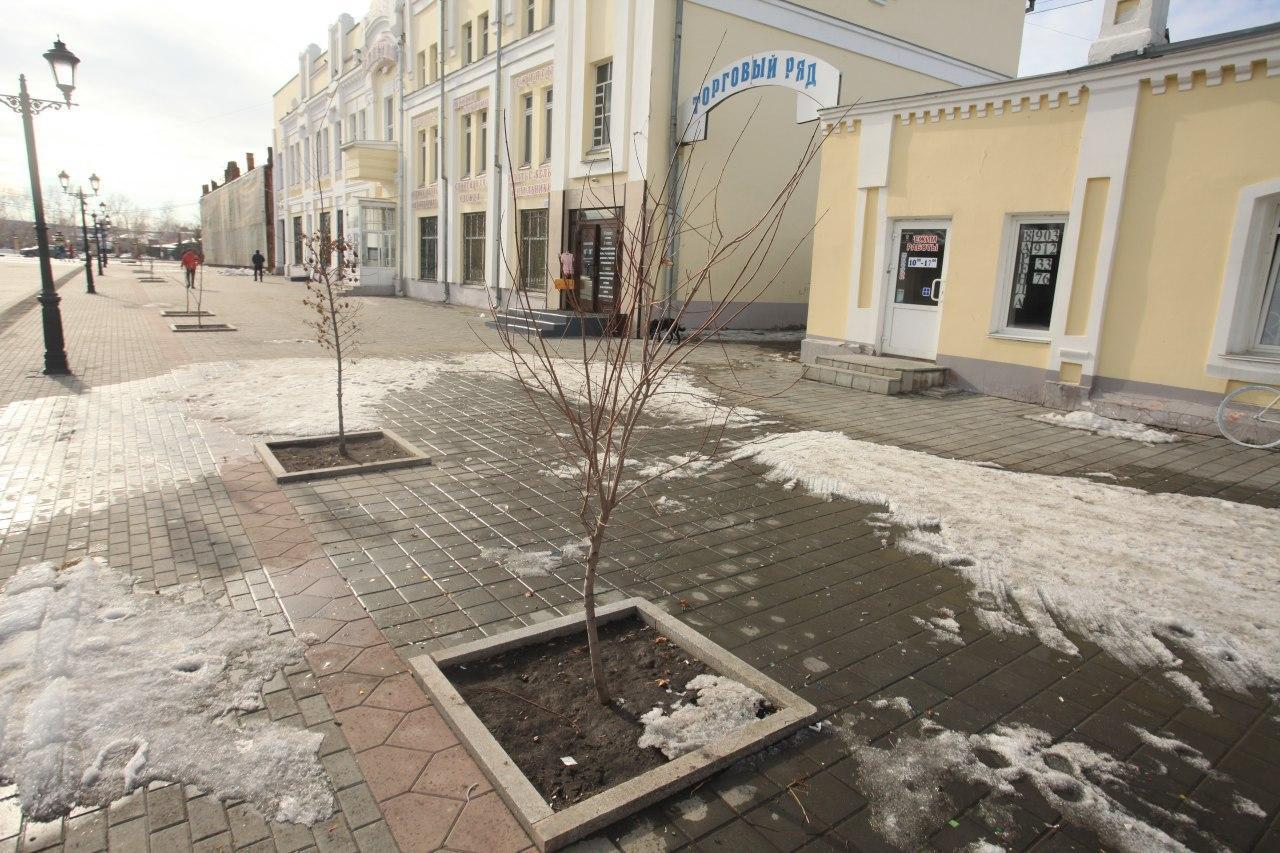 Уничтоженные Барнауле кусты стоимостью тысяч рублей гарантии восстановят дорожники