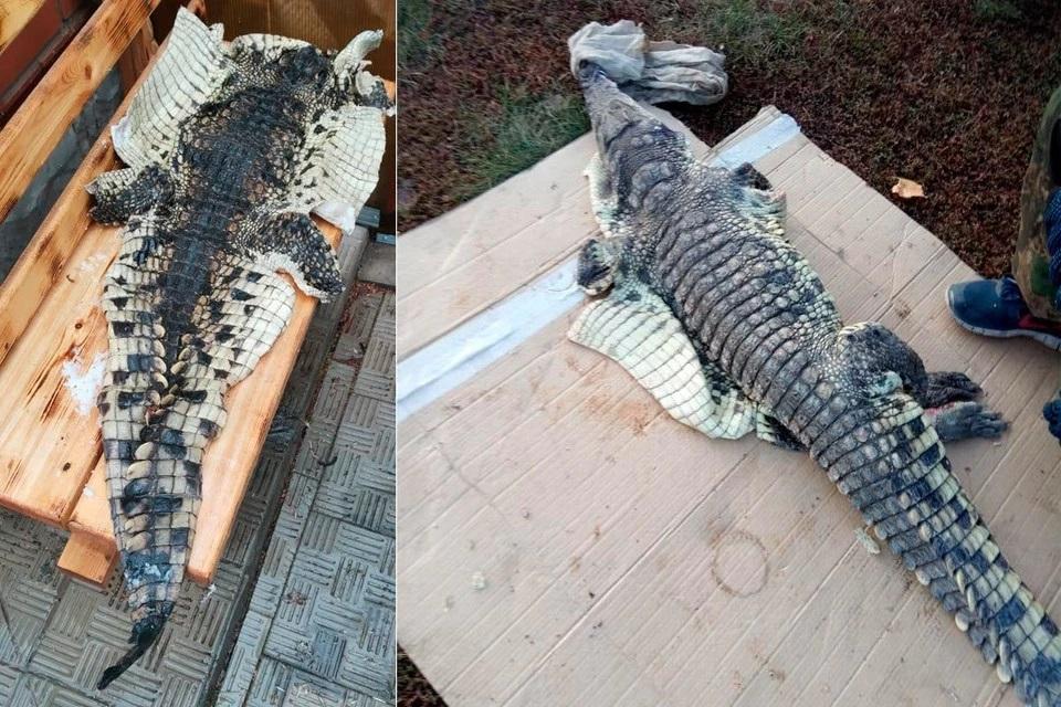 Мимокрокодил чиновник Минприроды рассказал поимке опасной рептилии алтайской реке