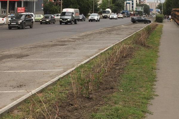 Мэрия Барнаула пообещала восстановить сгинувший из-за благоустройства кустарник центре города