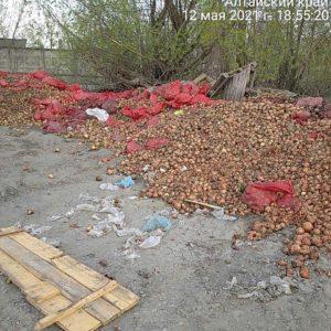 Жителю Заринска грозит 100-тысячный штраф вываленные городе центнеры гнилого лука