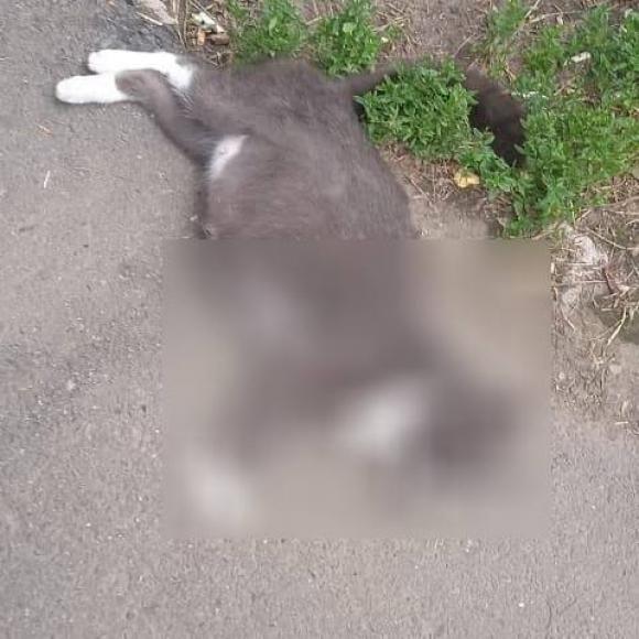 Житель Барнаула смерти забил беременную кошку глазах группы детей